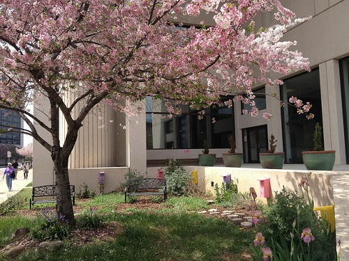 Springtime at the Library; from Chattanooga Public Library