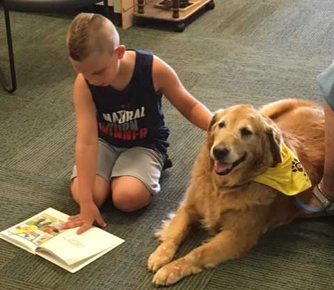 Are Dogs the New Library Cat?